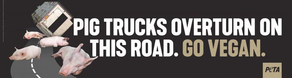 Pig Trucks Overturn On This Road. Go Vegan.
