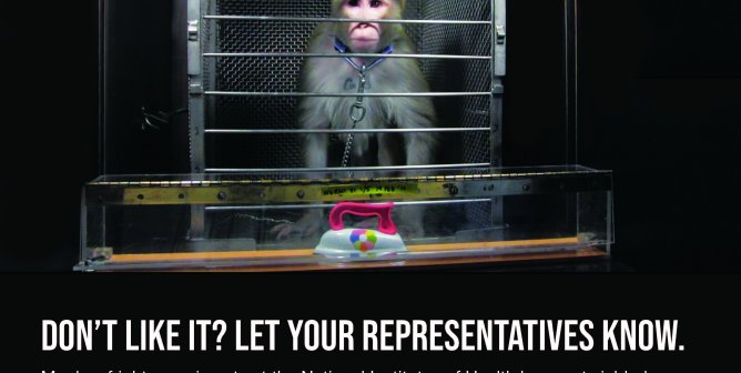 The Government Is Monkeying Around With Your Tax Dollars