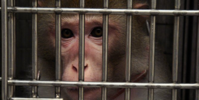 Tax Dollars at Work: 8 Animal Torture Devices Labs Buy With Your Money