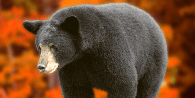 Washington Residents: Speak Out Against Spring Black Bear Massacre!