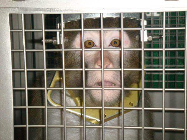 cranial restraint device used to torture monkeys in labs