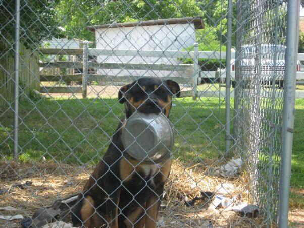 dog in pen holding bowl