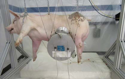 Ford Spins out of Control as Deadly Crash Tests on Pigs Exposed by PETA