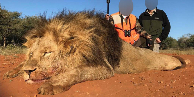 PETA Applauds Progress in South Africa as Officials Move to Protect Lions