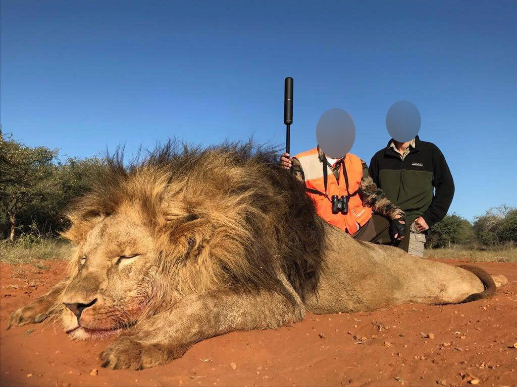 hunters and a dead lion in South Africa