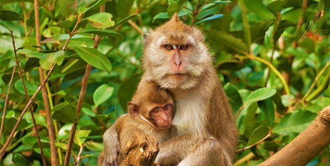 PETA to Wamos Air: Don't Ship Monkeys to Labs