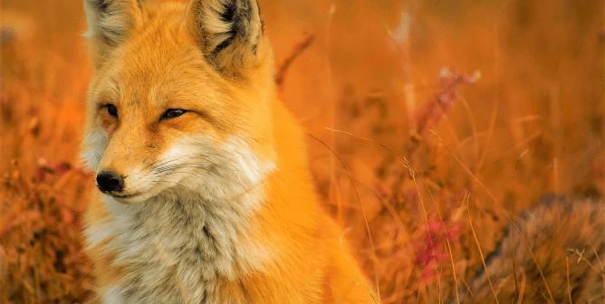 Urge RUDSAK to Go Fur-Free!