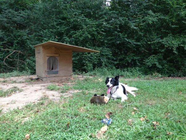 a tethered dog laying outside the doghouse with a toy