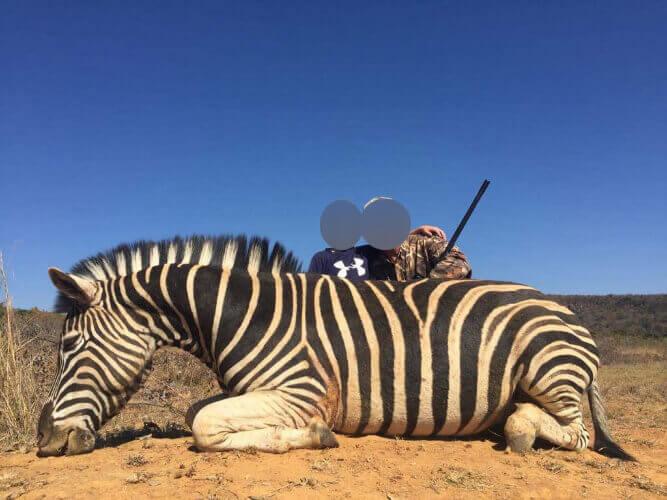 Hunters posing next to dead zebra