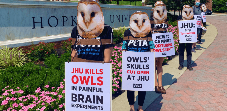 'Owls' Ruffle Feathers at Johns Hopkins Orientation