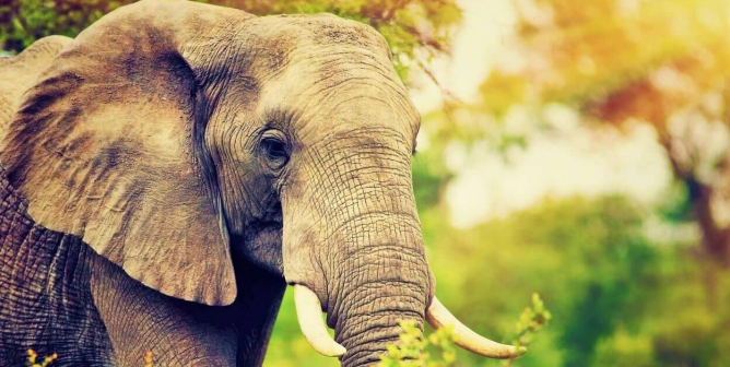 Progress! Following Death of Beulah the Elephant, 'Big E' Goes Elephant-Free This Year