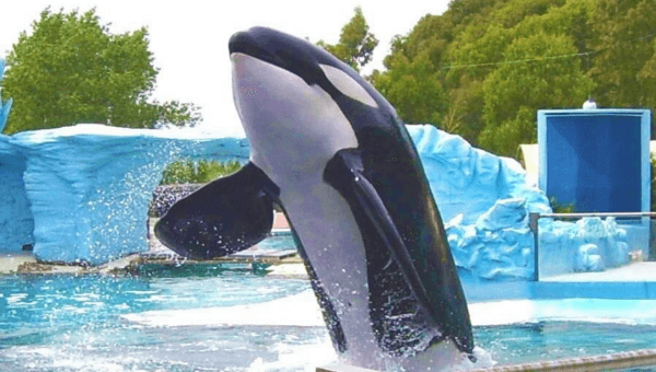 Ask Travelzoo and H-E-B to Leave SeaWorld Cruelty Behind!