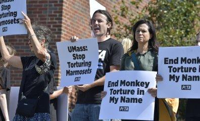Casey Affleck and PETA Demand That UMass End Cruel Monkey Experiments