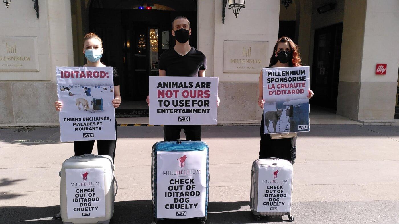 Millennium Hotels Paris PETA protest Iditarod cruelty
