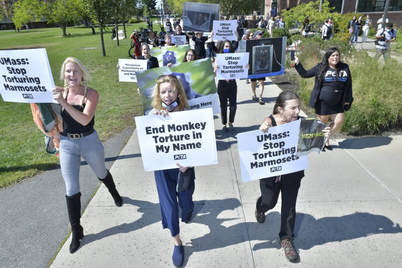 PETA UMass Marmoset Menopause Experiments Protest