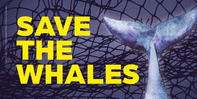 Here's How You Can Help 'Save the Whales'—Don't Eat Fish!