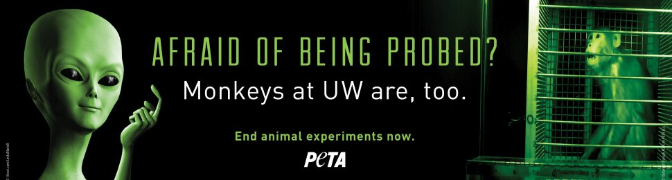 Afraid Of Being Probed? Monkeys At UW Are, Too