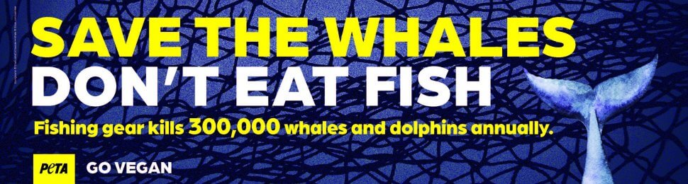 Save The Whales, Don't Eat Fish