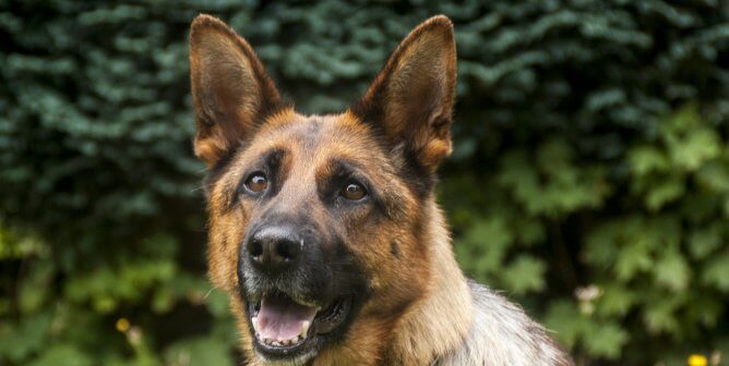 UPDATE on Dogs in Afghanistan: U.S. Army Responds to PETA