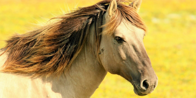 PETA Launches Hotline for Reporting Cruelty to Horses Used for Racing