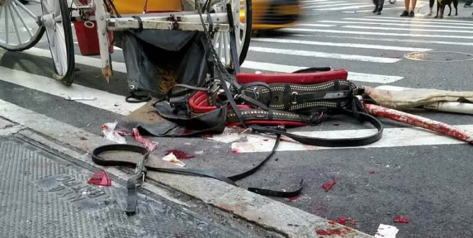 VIDEO: Horse Crashes in NYC—Carriage and Street Left Splattered With Blood