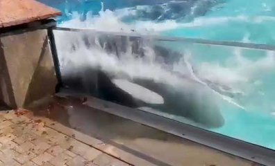 Imprisoned at Marineland, Lone Orca Appears to Bash Her Head Against Tank Over and Over (VIDEO)