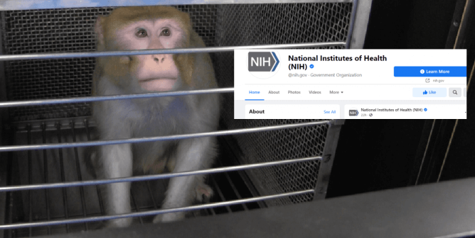 NIH Blocks Comments Criticizing Cruel Tests on Animals From Its Social Media—PETA Takes Action