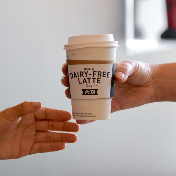 give vegan oat milk lattes