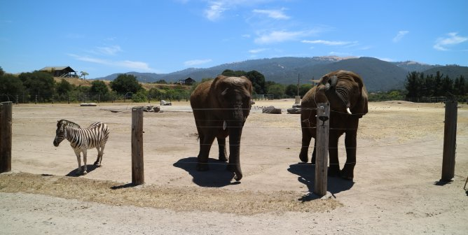 Monterey Zoo: Unredacted Records Don't Lie, but Apparently, the USDA Does