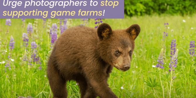 Ask Photographers to Stop Exploiting Wildlife for Bogus Photo Ops