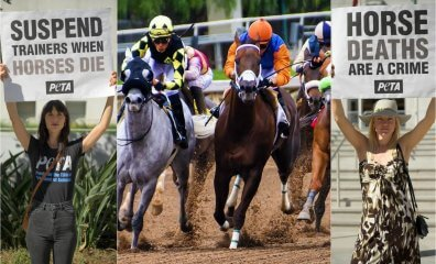 Ohio Racing Officials Look to Implement Lifesaving Rules After Horse Dies