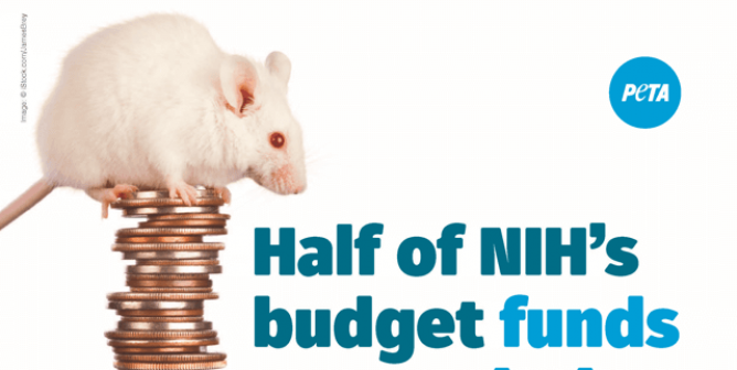 Half Of NIH's Budget Funds Research That Fails 90% Of The Time
