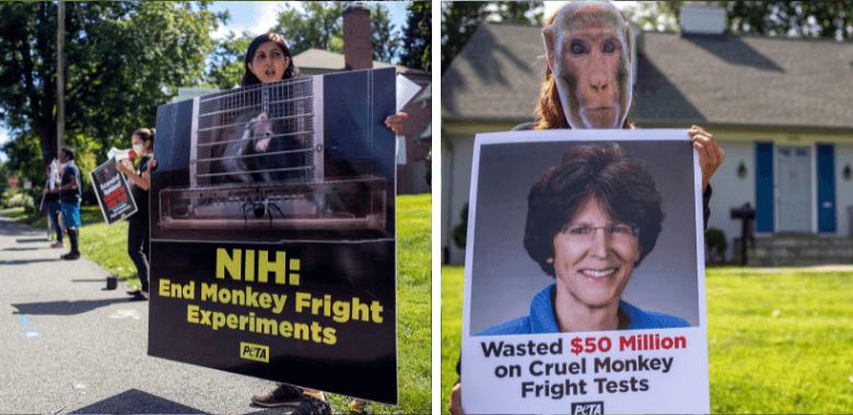 'Monkeys' Hold 'Shriek-In' at NIH Experimenter's Home