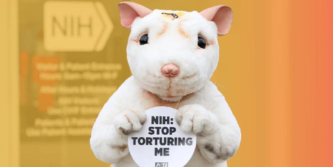 PETA to Biden: Choose NIH Director Who Will Help Humans, Not Hurt Animals