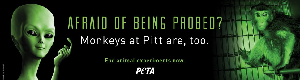 Afraid Of Being Probed? Monkeys At Pitt Are, Too