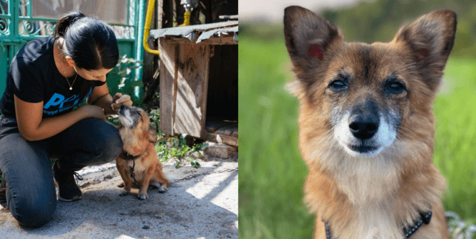 Dog Rescued After Years on Heavy Chain: See Paulina's Transformation