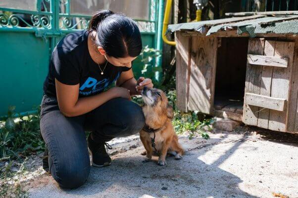 PETA ajută România să lucreze cu câinele Paulina