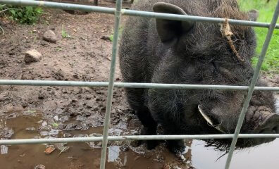 Don't Be Fooled by the Name—Why 'Animal Haven' Zoo Is a Hellhole