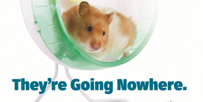 The Trouble With Animal Experiments? They're Going Nowhere