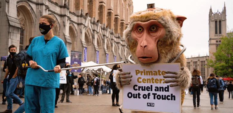 PETA 'Primate' Protests UW Torture on First Day of Class