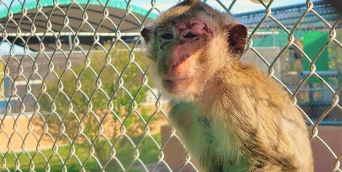 Department of Transportation: Don't Let Animal Experimenters Force Airlines to Transport Monkeys to Their Deaths