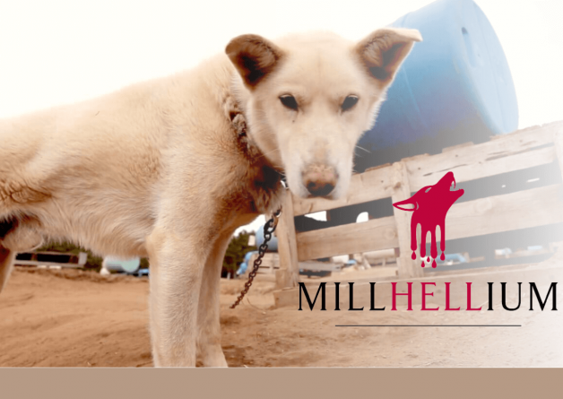 Tell Millennium Hotels and Resorts to Stop Sponsoring Deadly Iditarod