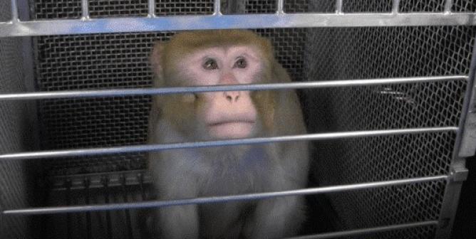 Help Close Elisabeth Murray's Monkey Terror Lab with FREE Flyers