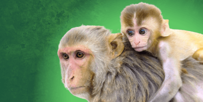 5 Baby Monkeys Died in 2 Days—PETA Asks District Attorney to Investigate