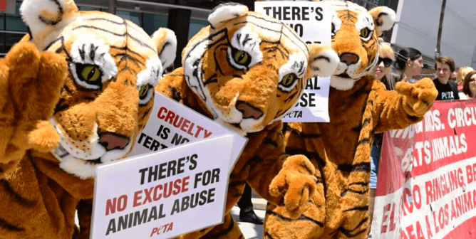 Ringling's Animal-Free Comeback Sends a Powerful Industry Message: Cruelty Has No Place in Circuses