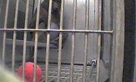 Columbia Cruelty