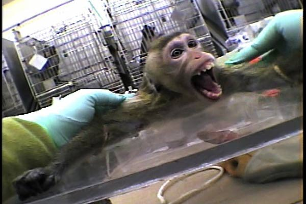 Animal testing is cruelty and it