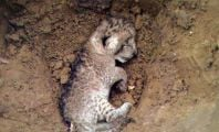 Dead Baby Cat