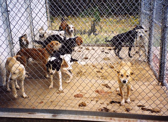 animal rescue in antioch ca