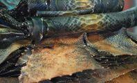 Reptile skins